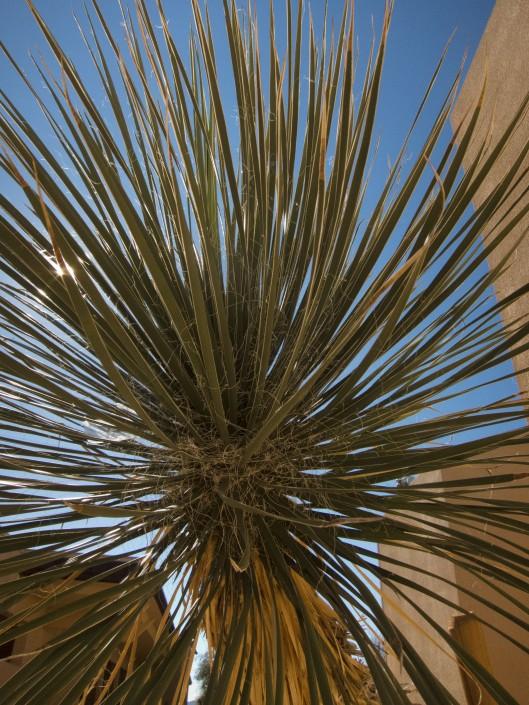 CVSCaremark Cacti2