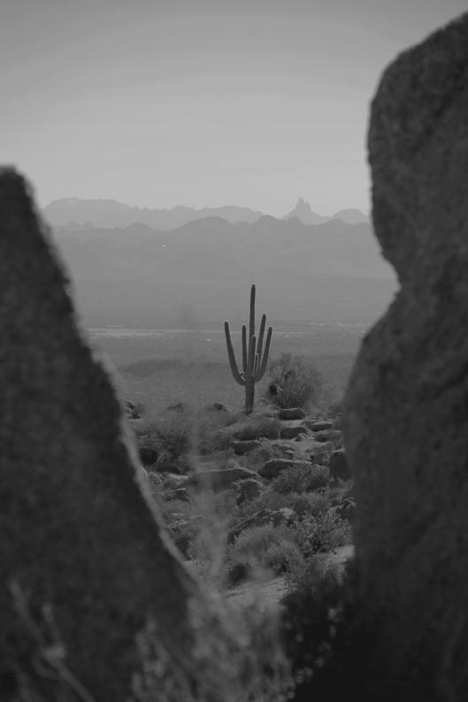 Marcus Landslide_BlackWhite Cactus2013_02_23_0337