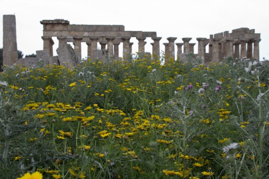 Selinunte Sicily2011 03 30_0234_edited-1