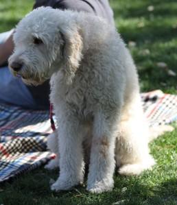 Sunday AFair white dog02_24_0413