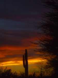 desert Botanical sunset 2