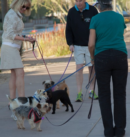dogs social 1