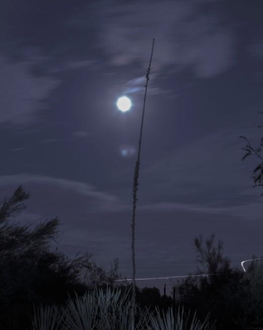 night photographyIMG_2941