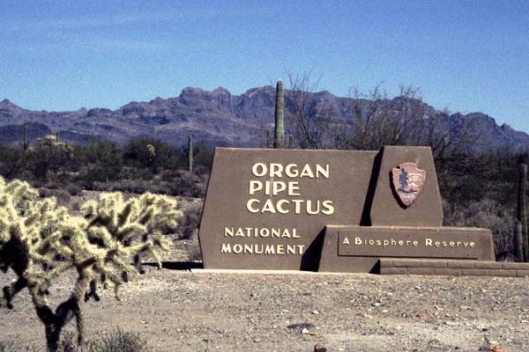 organ_pipe_cactus_sign11