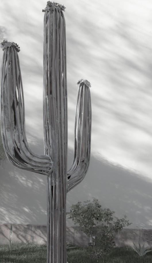 saguaro art festival