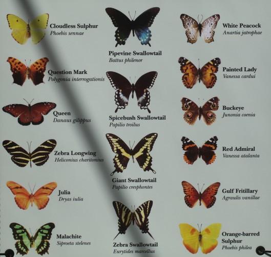 butterfly list