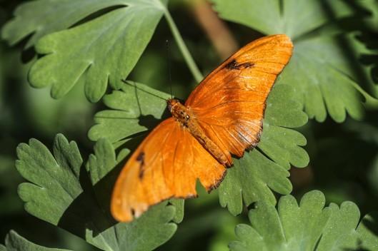 orange butterfly on green leaf