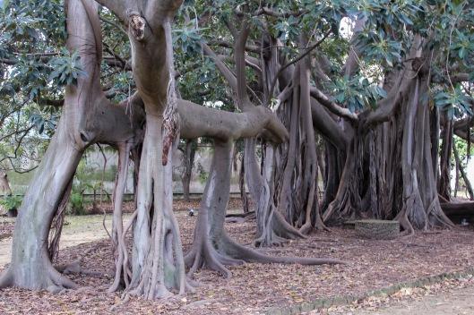 Sicily Botanical garden