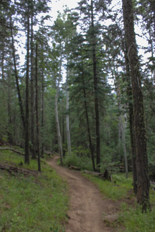 littlebear loop