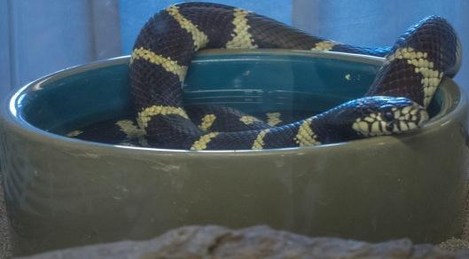 critter snakes