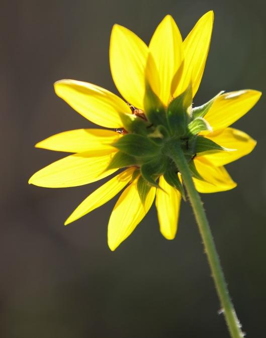backside flower