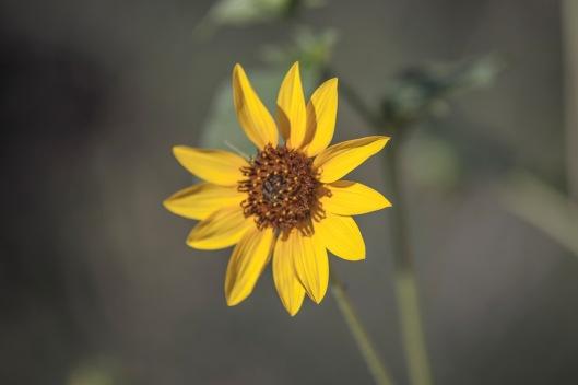 front side of flower