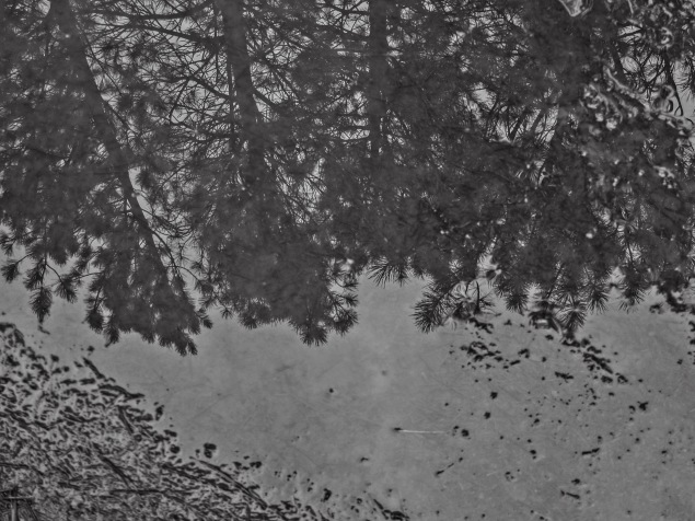 Looking into a rain-filled puddle
