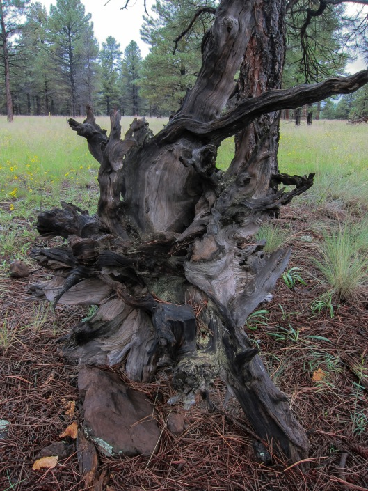 mother nature tree trunk 2