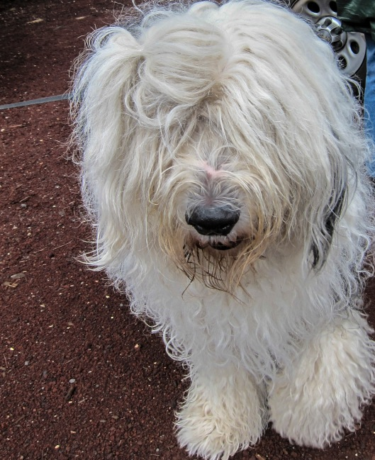 """The Campground Host """"sheepdog"""" greeted our group."""