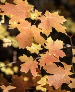 fall colors 6