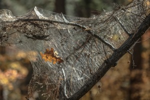 spider web1