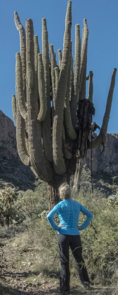 mighty saguaro