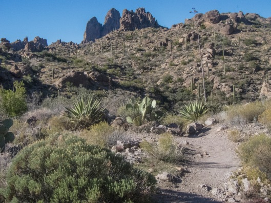 the trail forfront with weaver's needle background