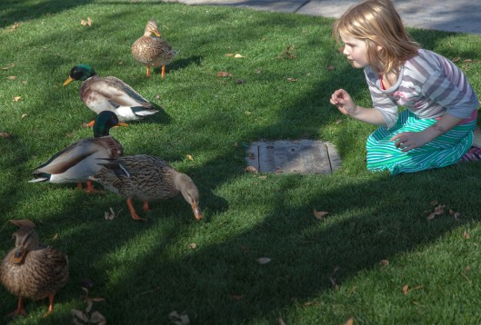 little girl and ducks