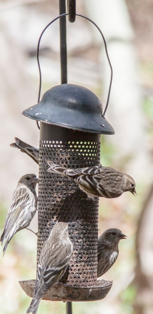 madera birds