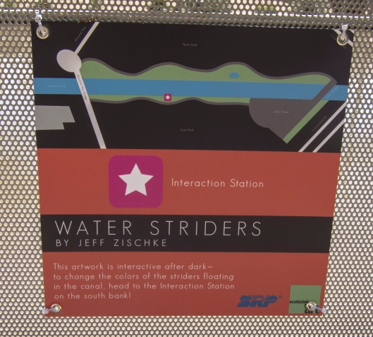 water striders canal