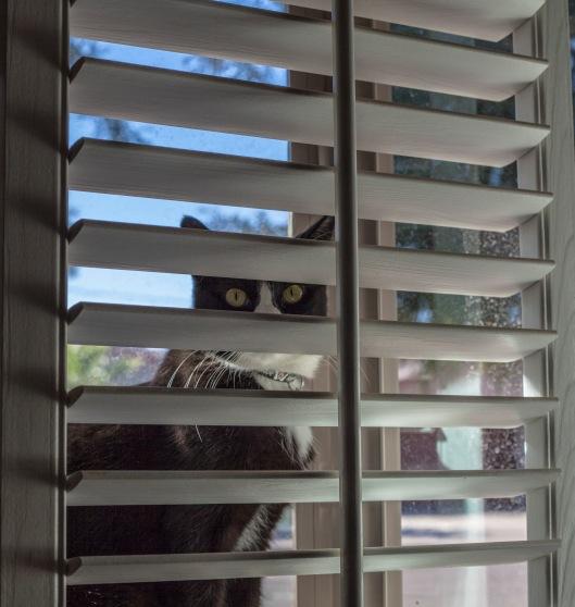 enjoying the window