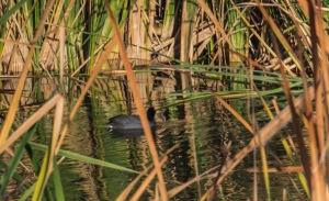 los rios grey bird