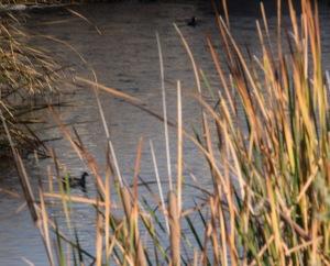 los rios two birds
