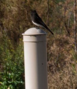 los tios bird on pole