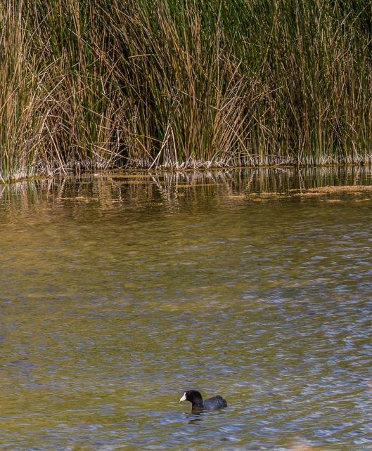 Kito Botiko duck