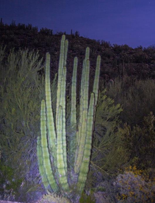 OP Cacti 1