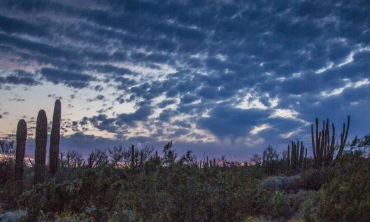 OP sunset west 4