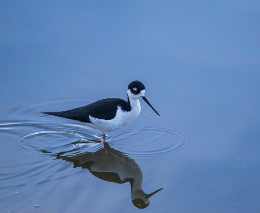 mcCormick birding2