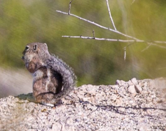 squirrell2