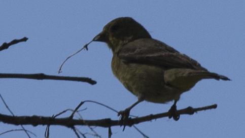 bird making nest