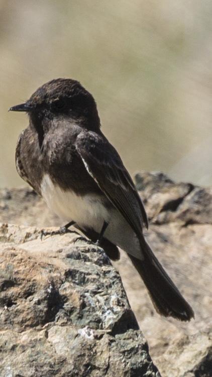 bird rock2
