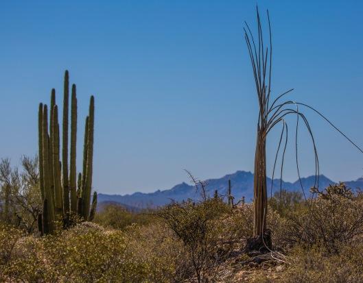 cactus skeleton1