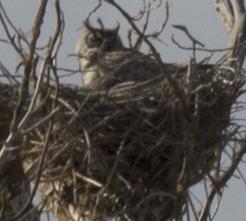 owl3 a