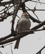 tubac bird in tree1