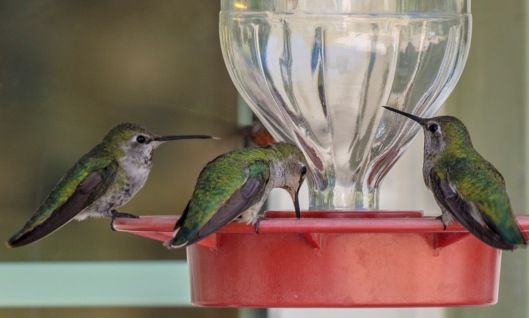 3hummers3