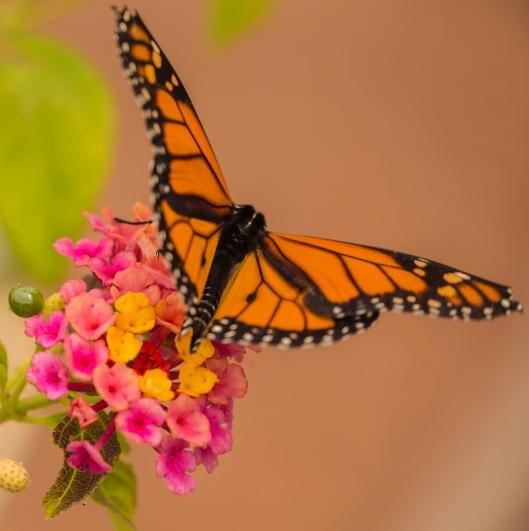 butterfly arboretum boquet