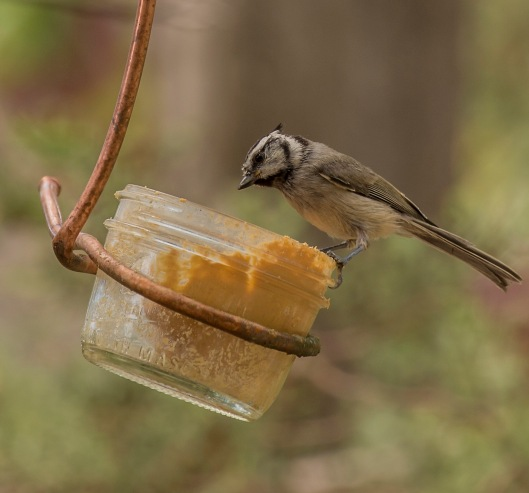 cabin bird peanut butter