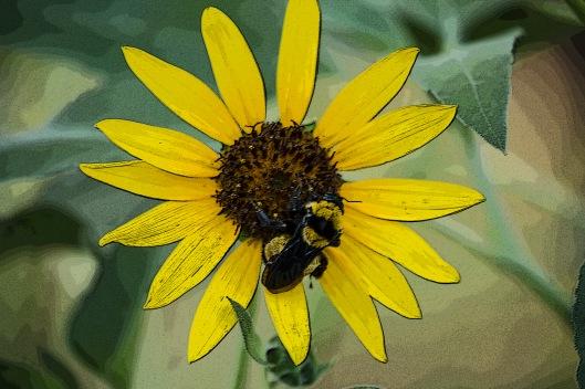 poster flower bee.jpg