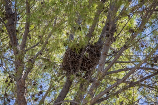 the nest2