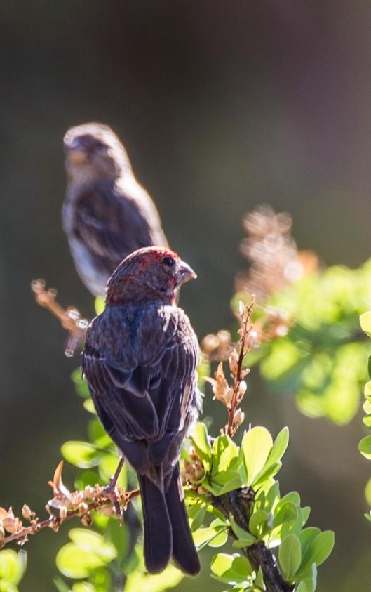 two birds on limb