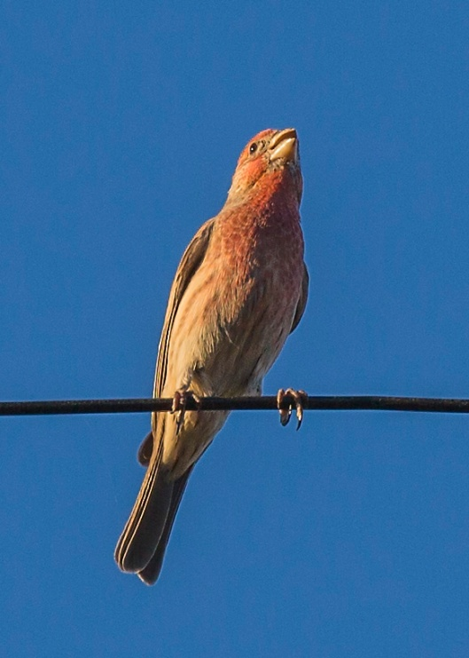 backyard-bird2