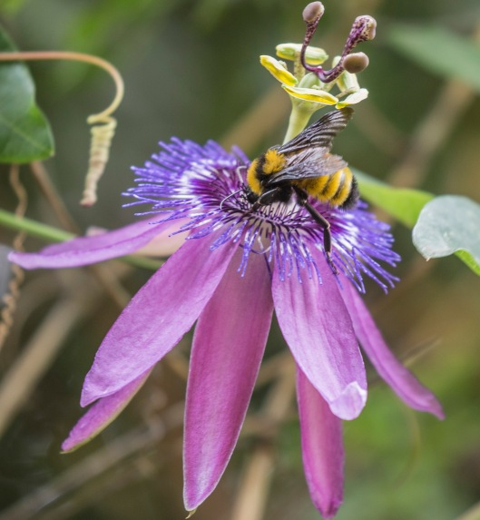 purple-flower-with-bee