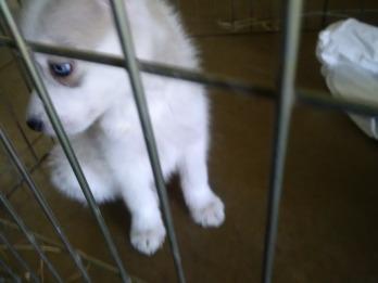 Sakari at two months