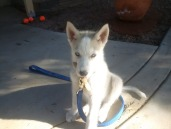 Sakari at three months